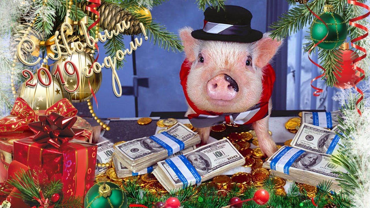 Поздравление обезьяны с новым годом свиньи отличие краски