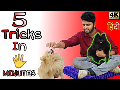 5 Dog Training Tricks in 5 Minutes! Come here , sit , lie down ,food training, shake hands 4K Hindi