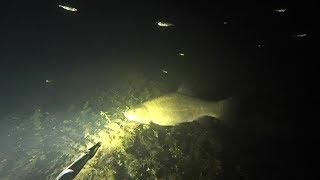 Ночная подводная охота на лесном озере Подводная рыбалка