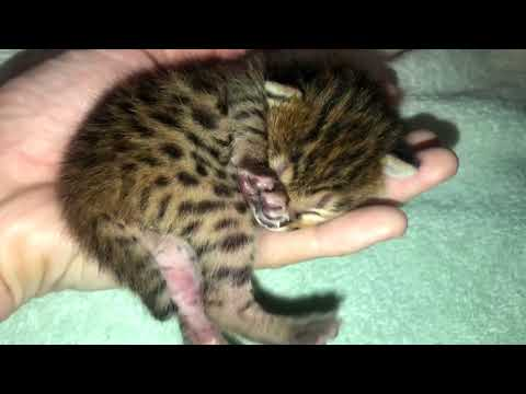 Kitten Fits in Palm of My Hand!