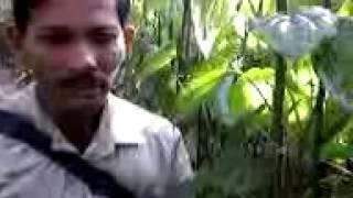 Video004