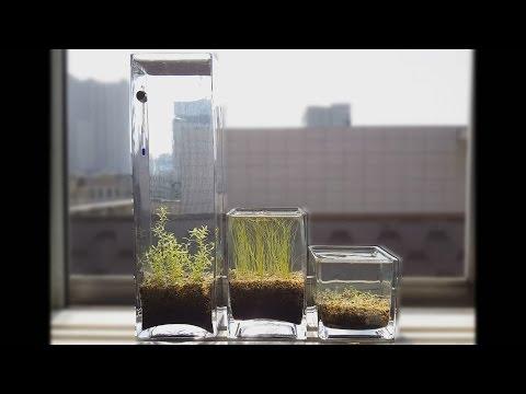 Tutorial - No Filter, No CO2, No Ferts, Windowsill Planted Pico Vase