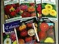 गर्मियों के मौसम के फूल !! Summer Flowers Plants to Grow - Hindi/ Urdu/ Punjabi