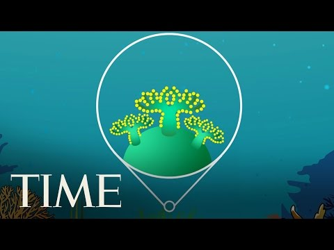 What Is Coral Bleaching? | TIME
