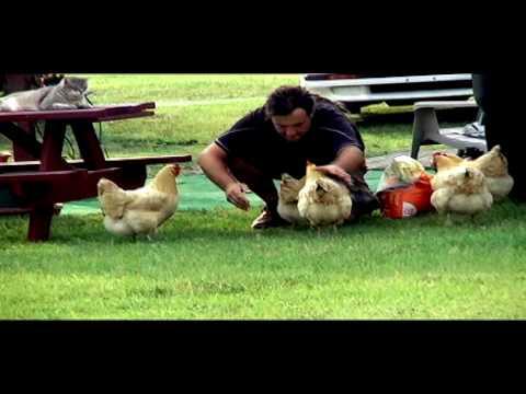 Hen Keeping & RV Life ( The Buff Orpington Chicken )