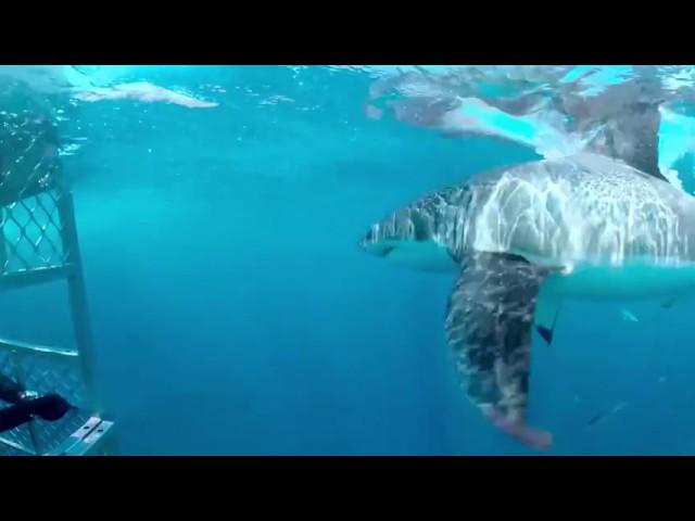 Discovery《週六鯊魚夜》VR 360度環景影片- 奇幻水世界