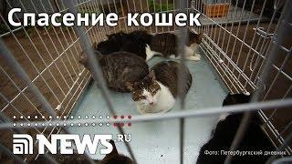 В Петербурге из огня спасли семь собак и 300 кошек