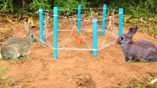 Amazing Quick Rabbit Trap Using PVC Circle Cage - How To Make Rabbit Trap With Pipe PVC (Work 100%)