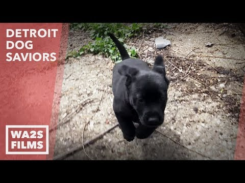 Another Stray Dog Acting Weird is Injured + Wiley & Puppies Part 2: Ep #3 Detroit Dog Saviors