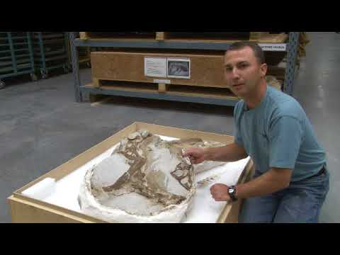 First Feathered Dinosaur Discovered in North America