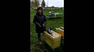 Самый эффективный способ лечения варроатоза пчёл.