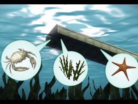 Invasive species set adrift by Japan tsunami reach US