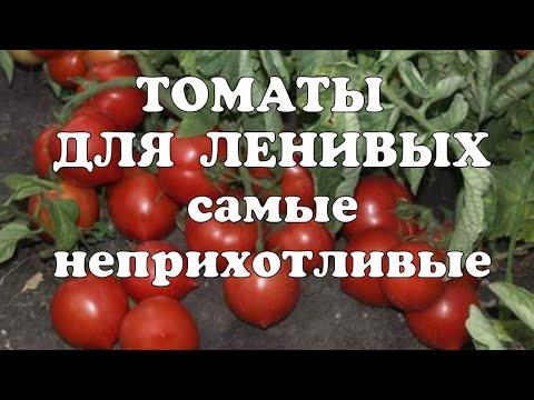 Неприхотливые томаты на сезон 2020//Томаты для ленивых