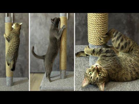 Для котов когтеточки своими руками