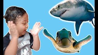 Bermain dengan Mainan binatang laut.