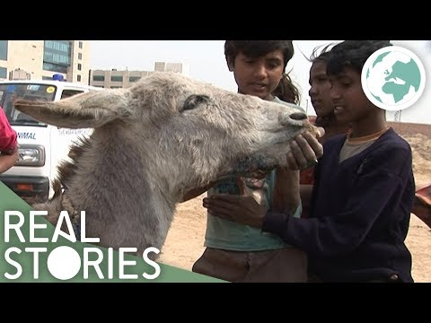 Saving the Slumdog Donkeys (Animal Rights Documentary) - Real Stories