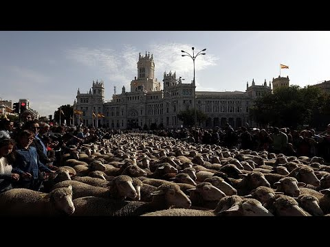شاهد: الخرفان تعوض السيارات في شوارع مدريد  - نشر قبل 20 دقيقة