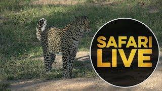 safariLIVE - Sunset Safari - May, 22. 2018 thumbnail