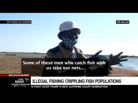 Illegal Fish Harvest Cripples Fish Populations In The North West
