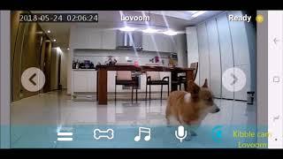 Best interactive pet camera   Dog reaction #9   pet gadget