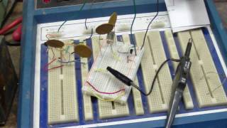 7.16Mhz Colpitts oscillator breadboard (step 1/3) HD!