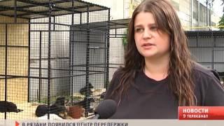 В Рязани появился новый приют для животных