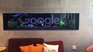 The fish tank at Google