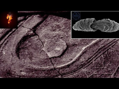 15-Million-Yr-Old Fossilized Foot-Print?