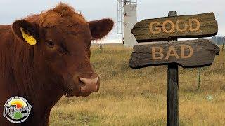 bulls-triumph-and-tragedy