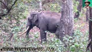 akash patal elephant spares more time with jasoprakas