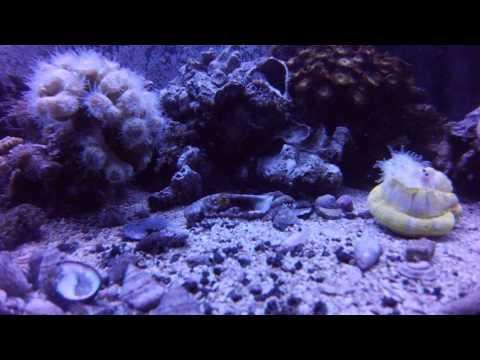 Feeding corals