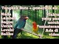 Masteran Tengkek Buto Dan Gemericik Air Nada Lambat Bagus Untuk Masteran  Mp3 - Mp4 Download