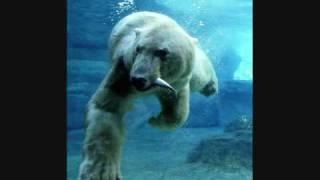Oomph Eisbär