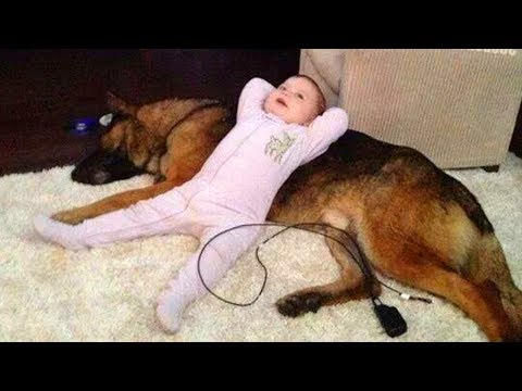German Shepherd Protects Babies and Kids Compilation 👶🐕 The best Protection Dogs