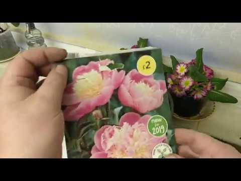 Growing PEONY In Pots PART I