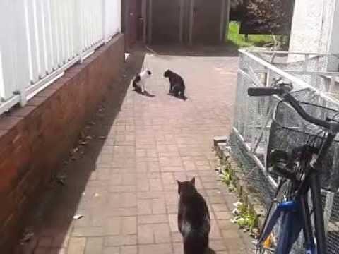 Cat protects his brother from another mother! Awesome!