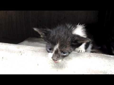 Shy little kittens meowing