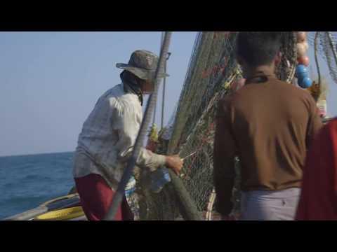 Illegal fishing: wildlife's hidden threat