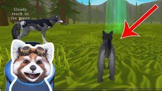 VIATA UNUI PUI DE LUP WildCraft Animal Sim Online 3D