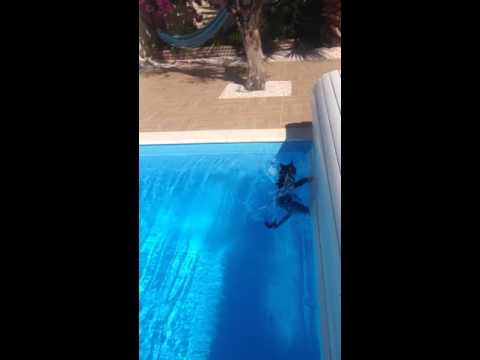 Epic cat fail in the swimming pool 2016