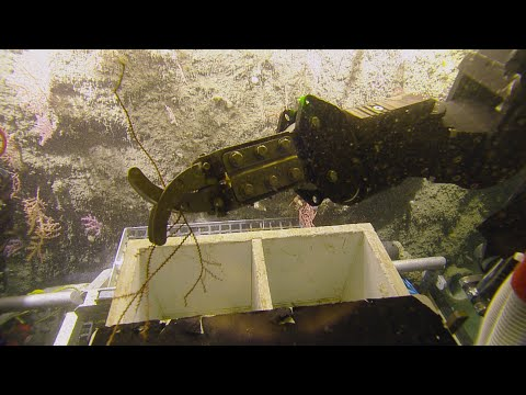 From Ship to Shore: Processing Biological Samples   Nautilus Live on YouTube