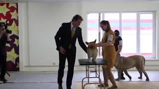Международная выставка собак Созвездие Азии, Бишкек 2018. Часть 20