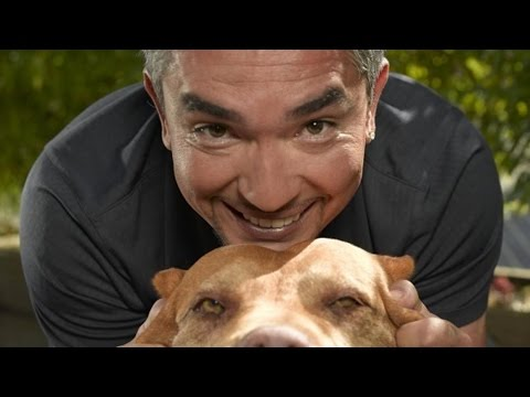 7 Reasons Why You Should Never Listen To The Dog Whisperer