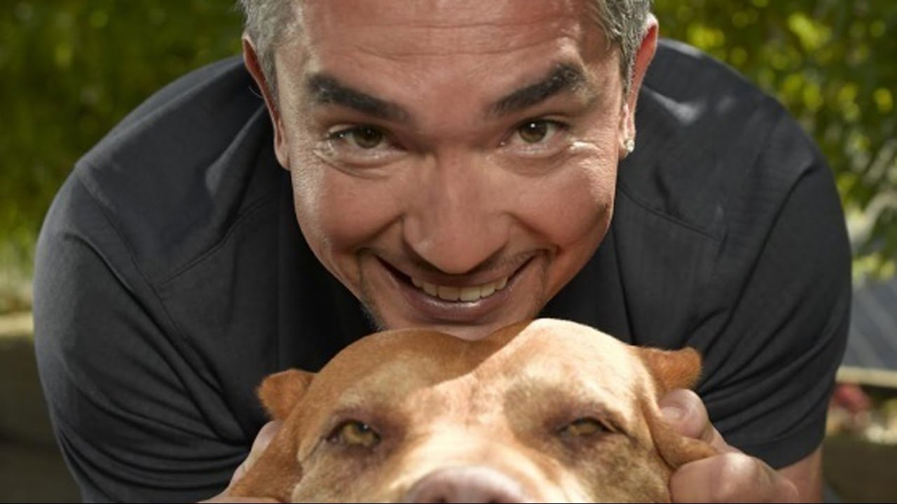 Download 7 Reasons Why You Should Never Listen To The Dog Whisperer