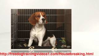 Great Method on How to Potty Train a Puppy Fast