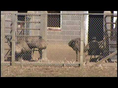 Download Dogs rescued from NJ 'puppy mill' [Delaware Online News Video]