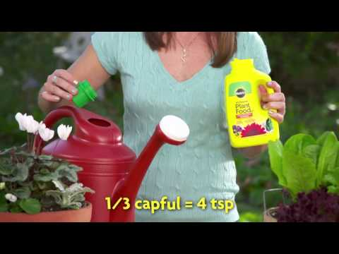 How to Use Miracle-Gro® Liquid All Purpose Plant Food Concentrate