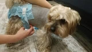Обзор на подгузники для собак