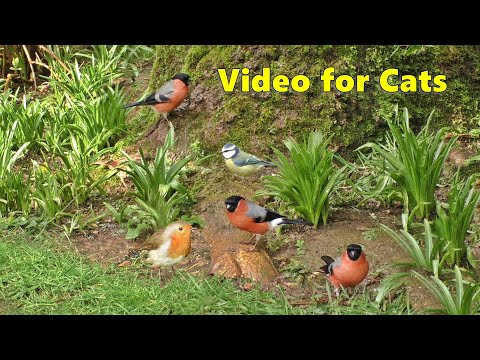 Cat TV - A Video For Cats To Watch Garden Birds - 8 HOURS