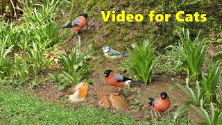 Cat TV  A Video for Cats to Watch Garden Birds  8 HOURS